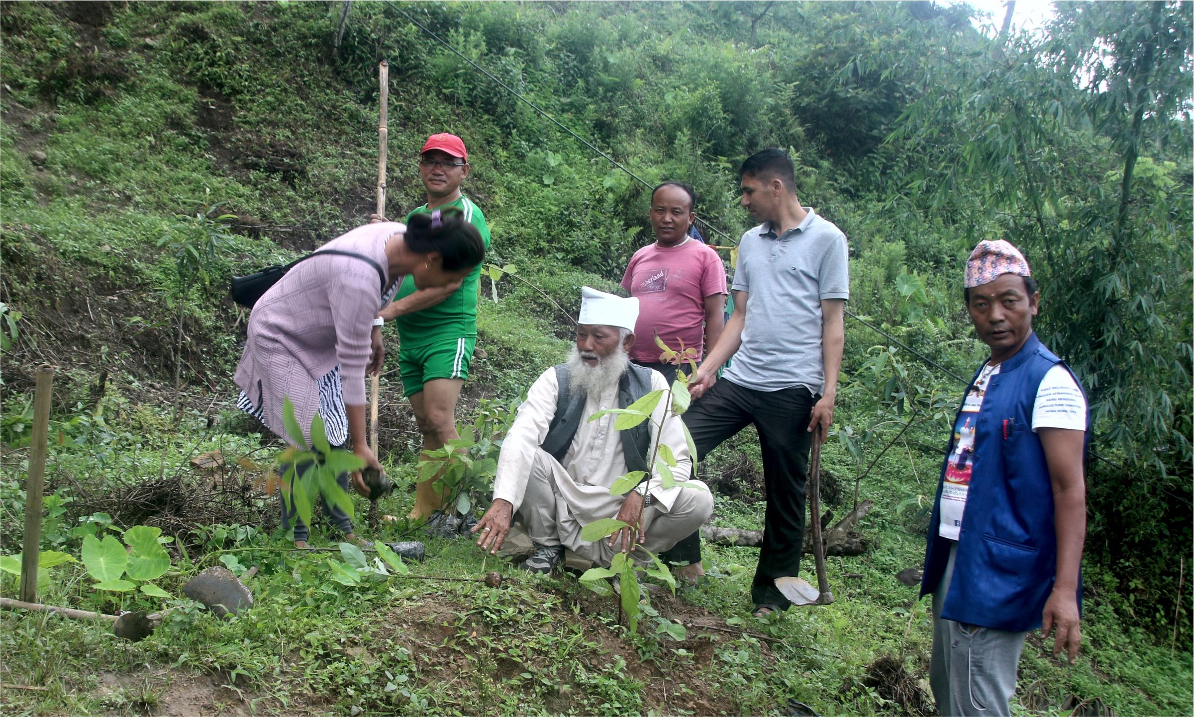 'माङगेन्ना र माङसेबुङ सहकारीद्धारा माङसेबुङमा वृक्षारोपण (फोटो फिचर सहित)